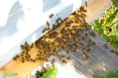 pszczoły obraz stock