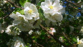 Pszczoły zbiory