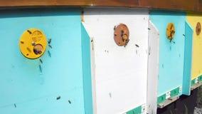 Pszczoły zdjęcie wideo