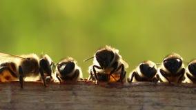 Pszczoły cool twój dom zbiory wideo
