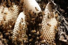 pszczoły działanie Zdjęcie Royalty Free