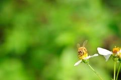 pszczoły działanie Zdjęcie Stock