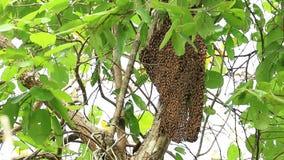 Pszczoły gniazdują wpólnie należnie zdjęcie wideo