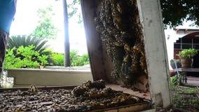 Pszczoły gospodarstwo rolne w Tajlandia zbiory
