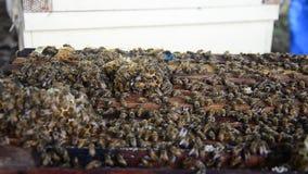 Pszczoły gospodarstwo rolne w Tajlandia zdjęcie wideo