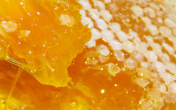 Pszczoły honeycomb z ciekłym miodem Zdjęcie Royalty Free