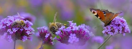 Pszczoły i motyl na kwiacie obraz stock