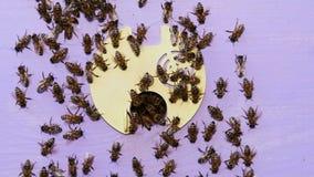 Pszczoły kolonia, przegląda outside zbiory wideo