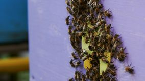 Pszczoły kolonia, przegląda outside zdjęcie wideo