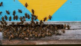 Pszczoły kolonia, przegląda outside zbiory