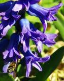 Pszczoły lądowanie Obrazy Stock