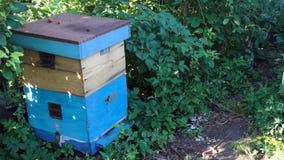 Pszczoły latają w błękitnego rój zbiory wideo