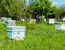 Pszczoły latają w drewnianego barwionego ul Beekeeping praca na pasiece Selekcyjna ostro?? obrazy royalty free