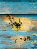 Pszczoły latają w drewnianego barwionego ul Beekeeping praca na pasiece Selekcyjna ostro?? obrazy stock