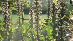 Pszczoły latanie na backlight roślinie zbiory wideo