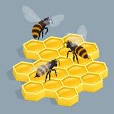 Pszczoły na grępli odosobnionej wektorowej isometric ilustraci Uszczelneni honeycombs Pszczoła kraul na honeycomb royalty ilustracja