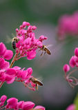 Pszczoły na pięcie roślinie Zdjęcie Stock