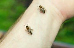 Pszczoły na ręce Zdjęcie Stock