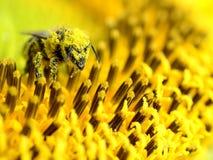 Pszczoły pollen wewnątrz obraz stock