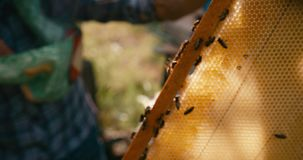 Pszczoły pracują na honeycombs na drewnianej ramie Ręki niewiadomy apiarist trzymają ramę Czerwona kamera zbiory wideo