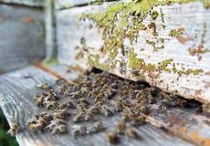 Pszczoły przed ulem obraz royalty free