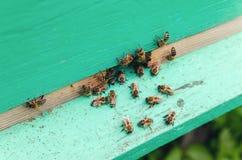Pszczoły przy wejściem rój Obraz Royalty Free