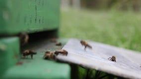 Pszczoły pudełko zdjęcie wideo