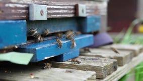 Pszczoły pudełko zbiory wideo