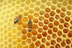 Pszczoły siedzi na honeycomb wśrodku ula, heksagonalny tło obrazy royalty free