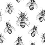 Pszczoły tekstura bezszwowy wzoru Realistyczna graficzna ilustracja Tło Zdjęcia Stock