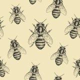 Pszczoły tekstura bezszwowy wzoru Realistyczna graficzna ilustracja Tło Zdjęcia Royalty Free
