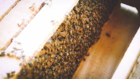 Pszczoły Utrzymywać fotografia royalty free