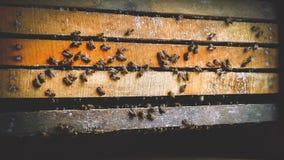 Pszczoły Utrzymywać fotografia stock
