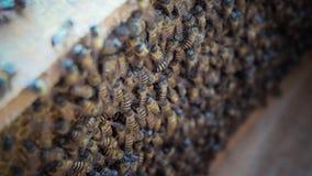 Pszczoły Utrzymywać zdjęcie royalty free