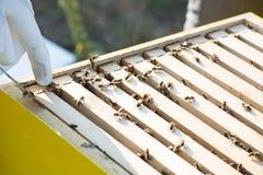 Pszczoły wśrodku ula w polu zdjęcia stock