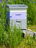 Pszczoły w pszczoła roju pudełku obrazy royalty free