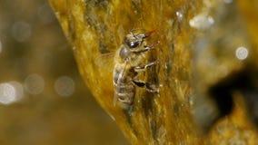 Pszczoły woda pitna zbiory
