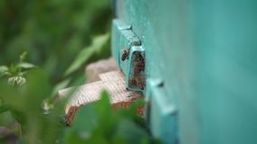 Pszczoły wychodzą z powrotem i latają pasieka zbiory