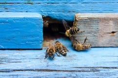 Pszczoły z miodem obraz stock