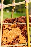 pszczoły zamykają w górę pracownika honeycomb wizerunek Fotografia Stock