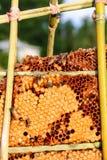 pszczoły zamykają w górę pracownika honeycomb wizerunek Obraz Stock