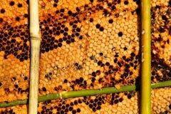pszczoły zamykają w górę pracownika honeycomb wizerunek Zdjęcia Stock