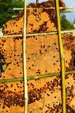 pszczoły zamykają w górę pracownika honeycomb wizerunek Fotografia Royalty Free
