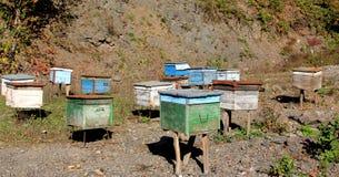 Pszczoła domy Zdjęcia Royalty Free