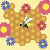 Pszczoła i honeycombs Obraz Stock