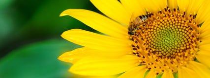 Pszczoła i kwiat Obraz Stock