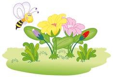 pszczoła kwitnie latanie Zdjęcia Royalty Free