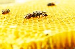 Pszczoła miodu komórki Obrazy Royalty Free