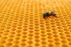 Pszczoła miodu komórki Obraz Royalty Free