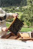Pszczoła na komórce Obrazy Royalty Free